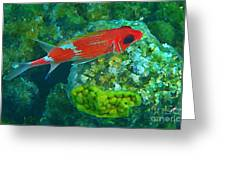 Squirrel Fish Greeting Card by John Malone
