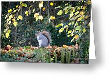 Squirrel Perched Greeting Card by Matt Malloy