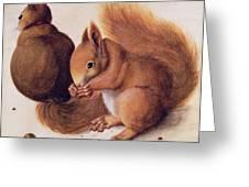 Squirrels Greeting Card by Albrecht Duerer