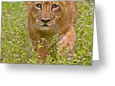 Stalking Practice Greeting Card by Ashley Vincent