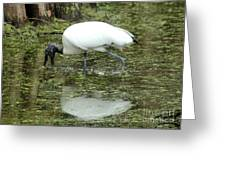Stalking Stork Greeting Card by Theresa Willingham