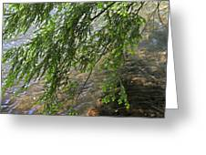 Stalking Trout Greeting Card by John Stephens