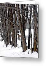 Stallion In The Woods Greeting Card by Patricia Keller