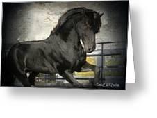 Stallion Power Greeting Card by Royal Grove Fine Art