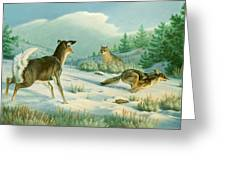 Stand-off  -whitetail Doe And Coyotes Greeting Card by Paul Krapf