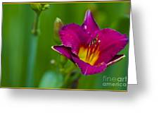 Standing Strong Greeting Card by Timothy J Berndt