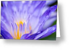 Star Of Siam Waterlily Greeting Card by Priya Ghose