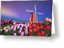 Star Trails Windmill And Tulips Greeting Card by William Lee