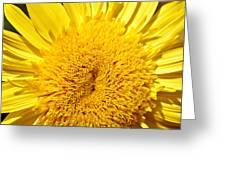 Starburst Lemon Aura Greeting Card by Julie Palencia