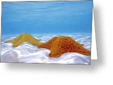 Starfish 1 Greeting Card by Lanjee Chee