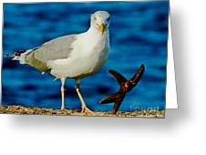 Starfish And Seagull Dance On The Rocks Greeting Card by Carol F Austin