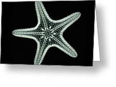 Starfish X-ray Greeting Card by Scott Camazine