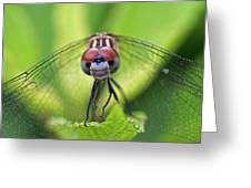 Staring Contest Greeting Card by Juergen Roth