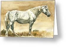 Sterling Wild Stallion Of Sand Wash Basin Greeting Card by Linda L Martin
