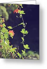 Still Holding On Greeting Card by Laurie Search