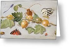 Still Life Of Branch Of Gooseberries Greeting Card by Jan Van Kessel