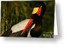Stork Colors Greeting Card by Adrian Tavano