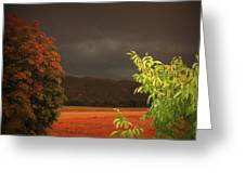 Storm Coming Greeting Card by Flow Fitzgerald