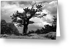 Storm Tree Greeting Card by Tranquil Light  Photography