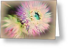 Strawflower Awakening Greeting Card by Shirley Sirois