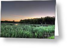 Streaky Swamp Sunrise Greeting Card by Deborah Smolinske