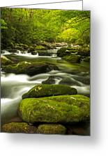 Stream In Spring Greeting Card by Phyllis Peterson