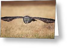 Stretched Out Greeting Card by Daniel Behm