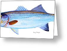 Striped Bass Greeting Card by Carey Chen