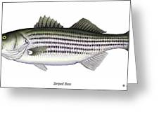 Striped Bass Greeting Card by Charles Harden