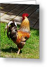 Strutting Rooster Greeting Card by Susan Savad
