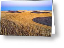 Stubble Greeting Card by Don Hall