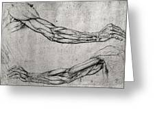 Study of Arms Greeting Card by Leonardo Da Vinci