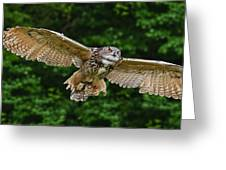 Stunning European Eagle Owl In Flight Greeting Card by Matthew Gibson