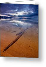 Submerged Log Greeting Card by Mike Lee