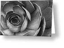 Succulent In Black And White Greeting Card by Ben and Raisa Gertsberg
