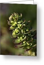 Succulent Greeting Card by Joy Watson