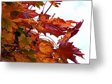 Sugar Maple Study Greeting Card by Pamela Patch