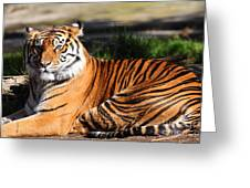 Sumatran Tiger 5D27142 Greeting Card by Wingsdomain Art and Photography