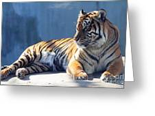 Sumatran Tiger 7d27276 Greeting Card by Wingsdomain Art and Photography