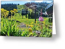 Summer At Wolf Creek Greeting Card by William Wyckoff