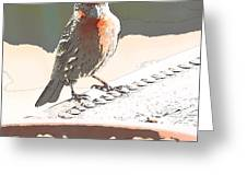 Summer Bird Greeting Card by Artist and Photographer Laura Wrede
