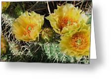 Summer Cactus Blooms Greeting Card by Kae Cheatham