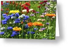 Summer Flowers Greeting Card by Elena Elisseeva
