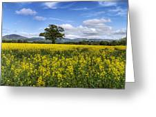 Summer Meadow Greeting Card by Ian Mitchell
