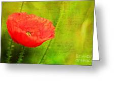 Summer Poppy Greeting Card by Darren Fisher