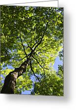 Summer Tree Canopy Landscape Greeting Card by Christina Rollo