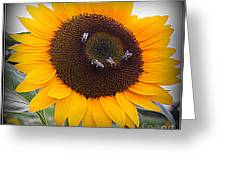 Summertime Beauty - Sunflower Greeting Card by Photographic Art and Design by Dora Sofia Caputo