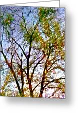 Sun Dappled Greeting Card by Dale   Ford