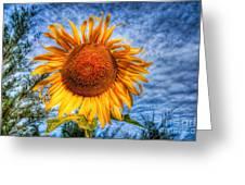 Sun Flower Greeting Card by Adrian Evans
