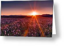 Sun Rays And Wildflowers Greeting Card by Leland D Howard